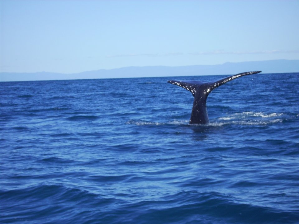 Pelorus Island - Whales seen between July and August.